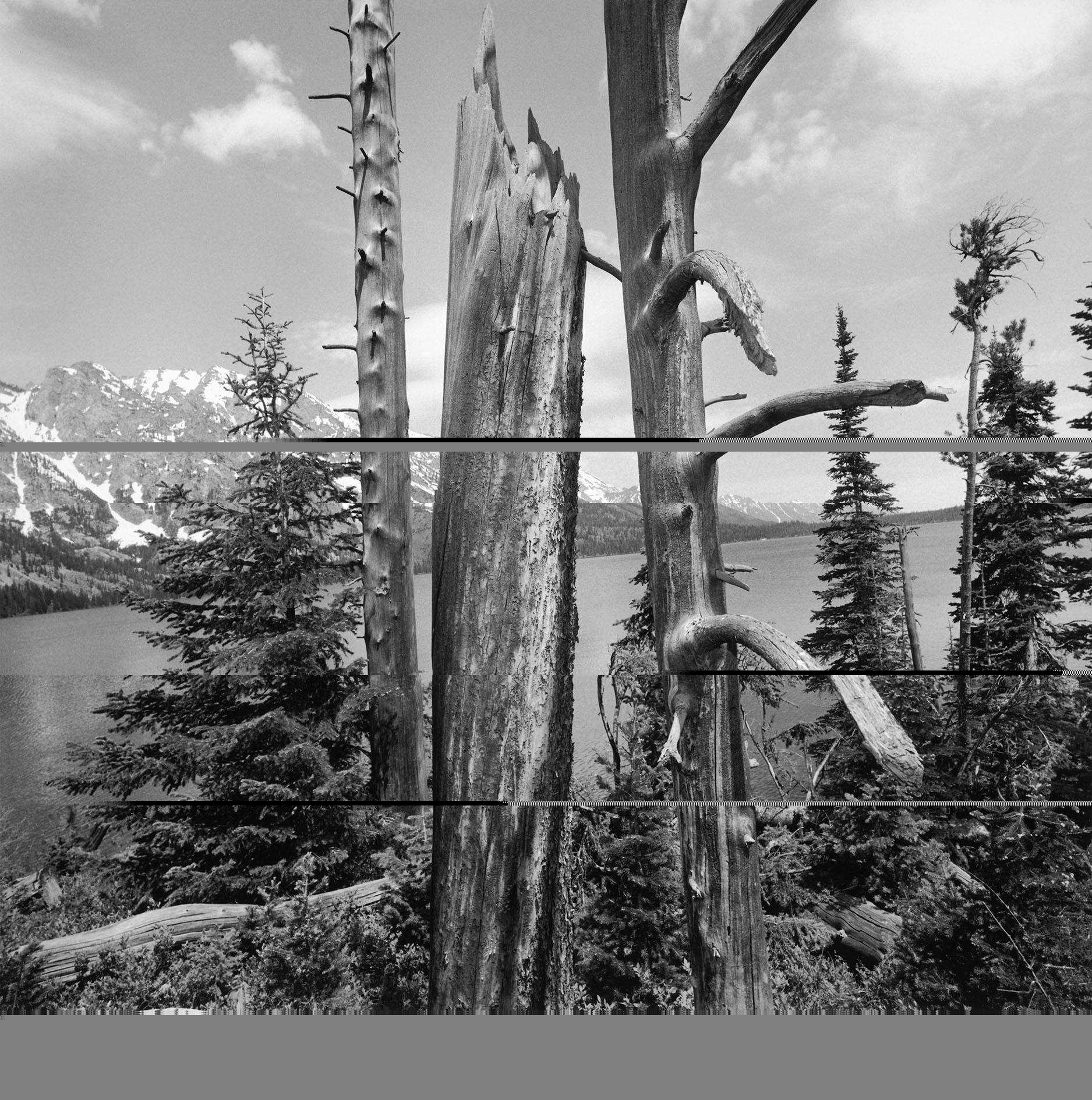 Grand Teton National Park, Wyoming, 1996. Gelatin silver print. © Lee Friedlander, Courtesy Fraenkel Gallery, San Francisco