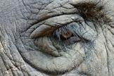artborghi-middle-elephant