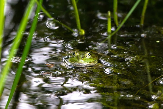 artborghi-frogs-1