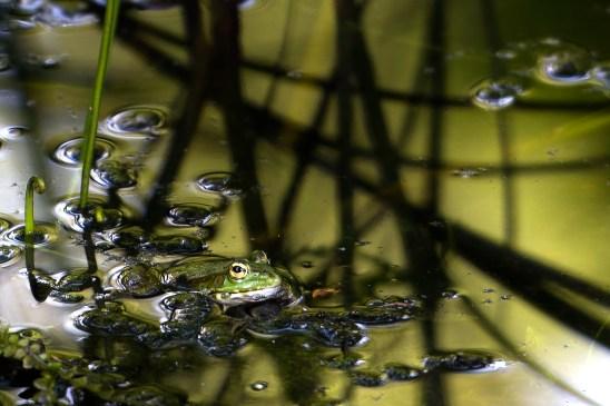 artborghi-frogs-3