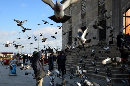 bosporus-birds-artborghi-4
