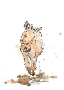 2015 10 Strike a pose donkey wm