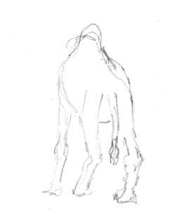 Val d'Argan camel