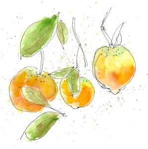 Val d'Argan orange tree
