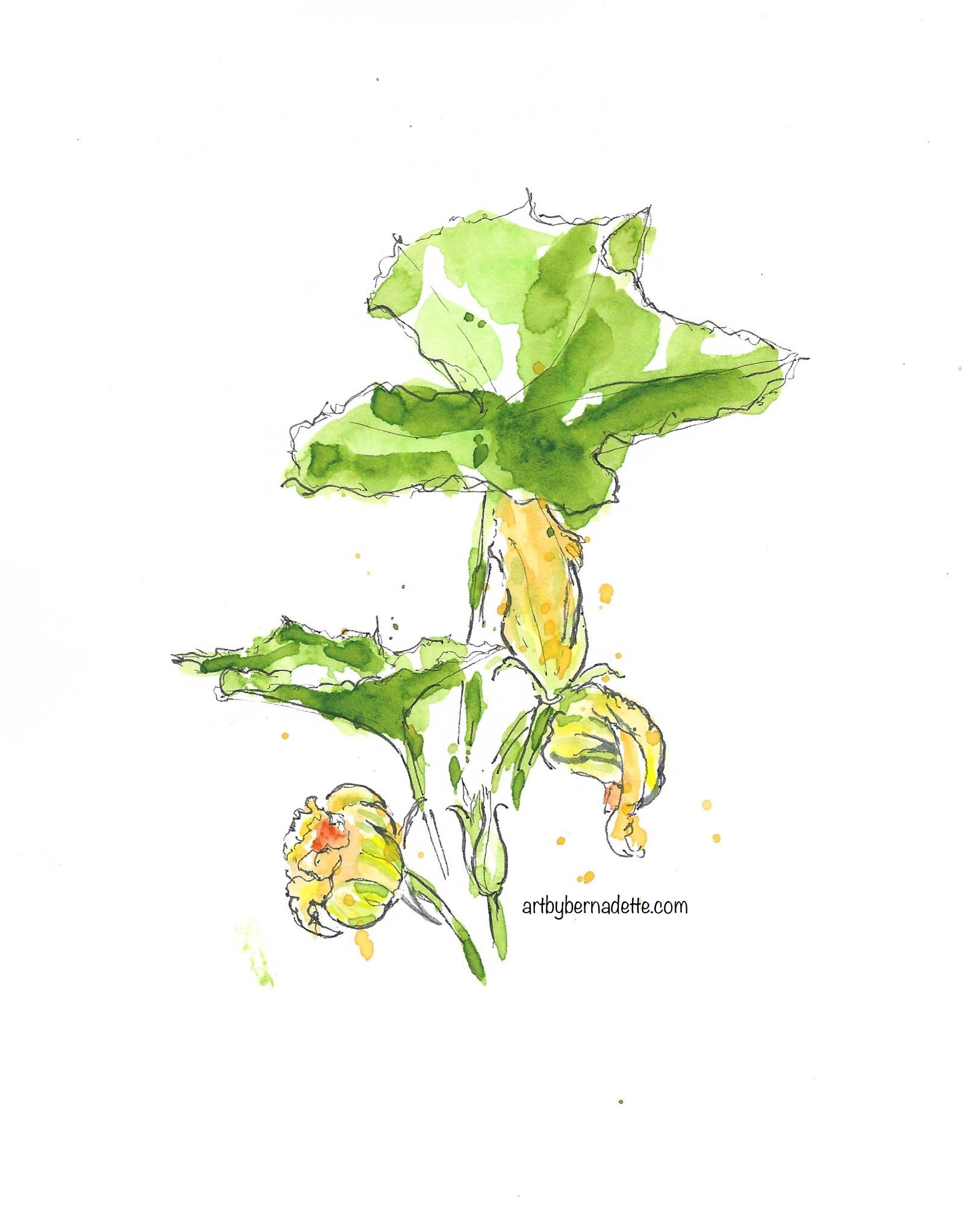 Zucchini watercolor