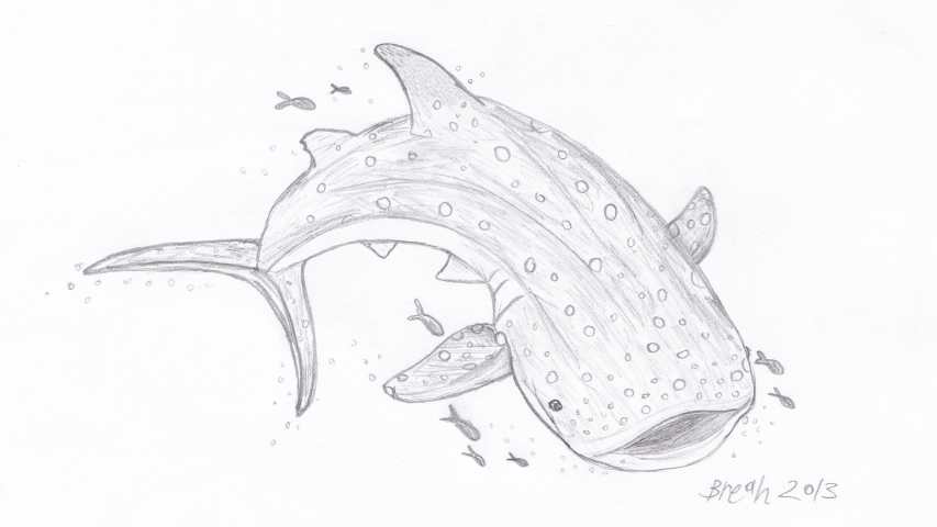 Whale Shark Largest Fish In The Sea Art By Breah