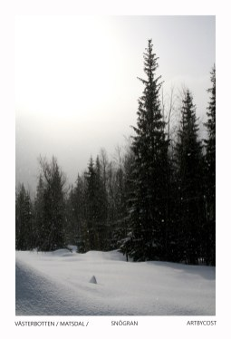 Photo Art Print Card - Snögran