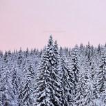 High Coast / Nätra Fjällskog - Vintersaga I