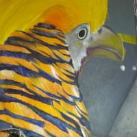 How to paint a golden pheasant