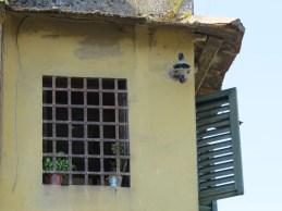A window near Ponte Vecchio Florence