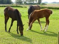 foals resized