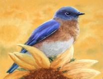 JimTyler_BluebirdOnSunflowers