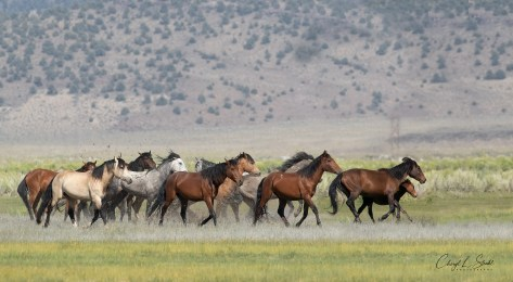 Cheryl Strahl Running Horses in Water - F_inal