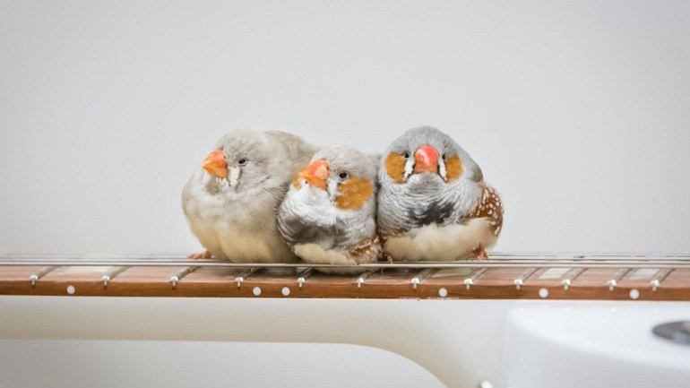 70 Zebra Finches Create Melodic and Ambient Music at the Peabody Essex Museum