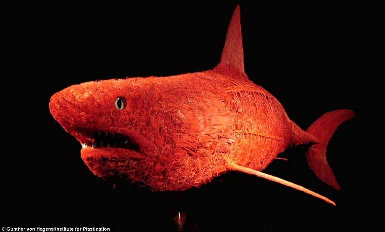 Image: blood vessel of a blue shark is on display at the  Franklin Institute Body Worlds Animals Inside Out