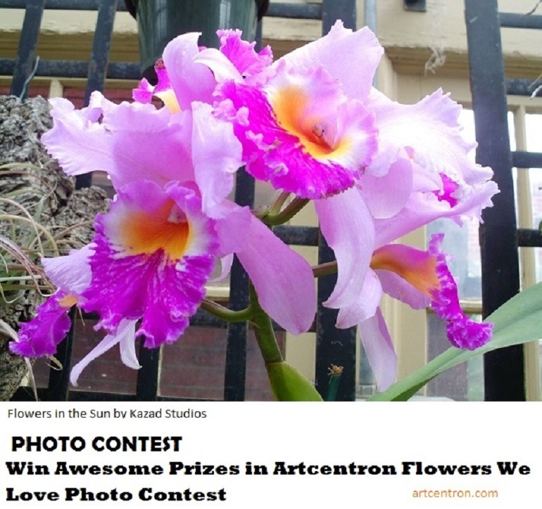Image: Beautiful flowers in the sun sets the mood for Artcentron Flowers We Love Photo Contest