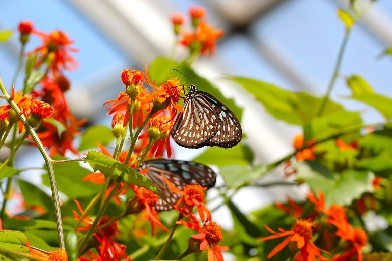 Image: Butterfly Sanctuary by Weijia Feng is 3rd Place Winner of the Artcentron Flowers We Love Photo Contest