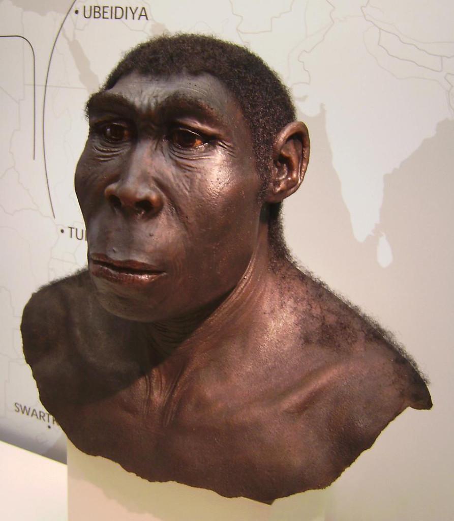 first artists - Homo erectus