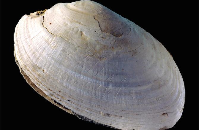 First Art - Trinil Shell
