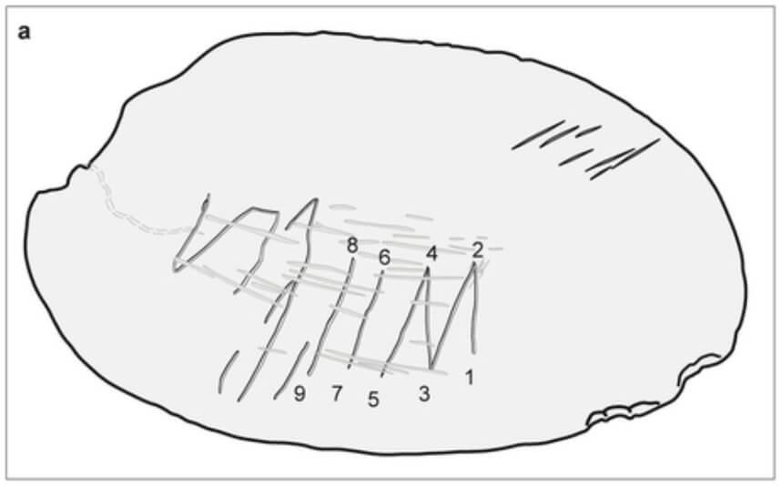 First Art - sketch of Trinil shell