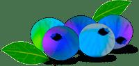 Alzheimer prevention Blueberry netalloy adj 200px