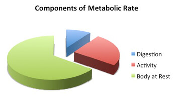 metabolic rate - components