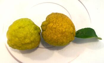 photo of rough lemons