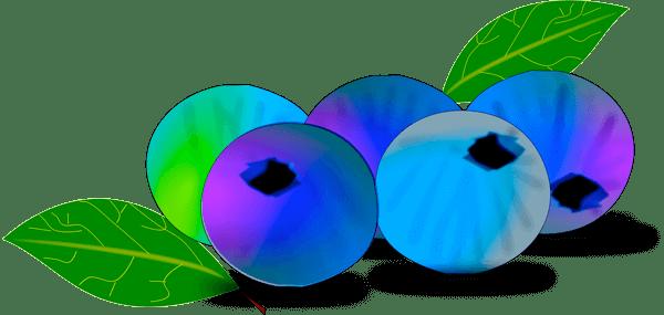 healthy food - blueberries