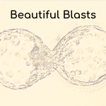 Beautiful Blastocysts