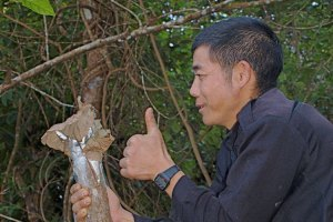 11-Tom-Post-World-Renue-Persimmon-Grafting-Laos