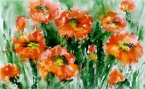 Poppies, 50x70 cm, watercolor