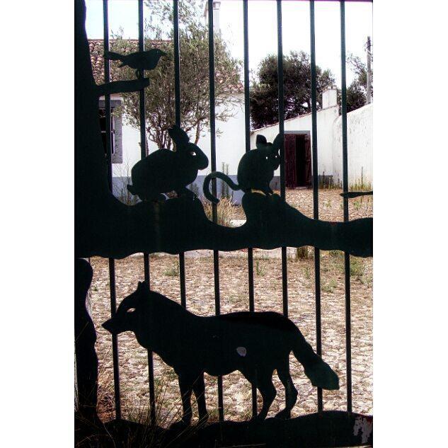 #animais #animals #wildlife #tapadademafra #portao #gate