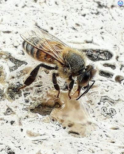 Aiutiamo le api a coltivare fiori...