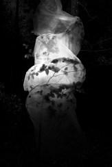 Waldlichtgedicht