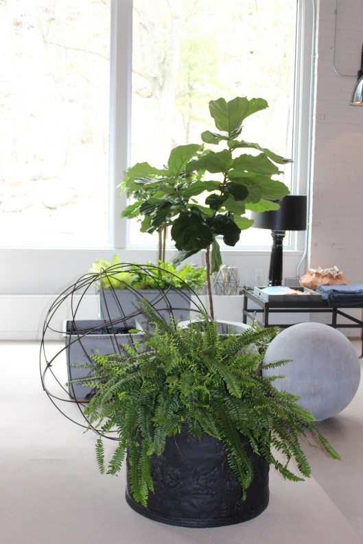 get ready for outdoors - or bring the indoors in!  resin and wire spheres, pennoyer newman containers, ferns and fruit trees
