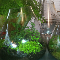 Artefact, terrariums in Belmont