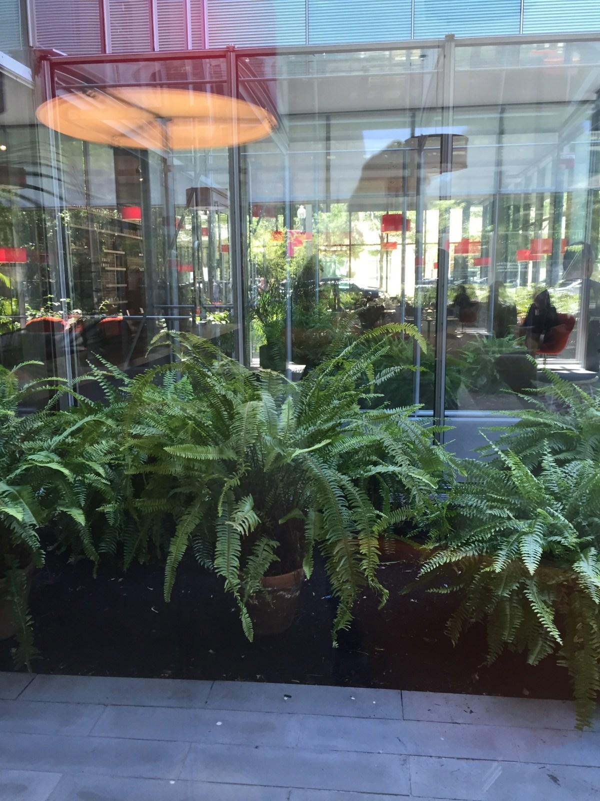 kimberly-queen-ferns-isabella-stewart-gardner.jpg