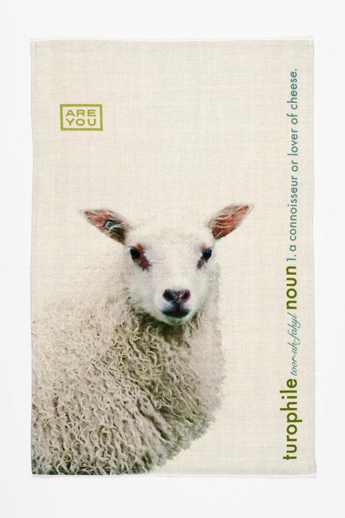 test-sheep-sizedjpg