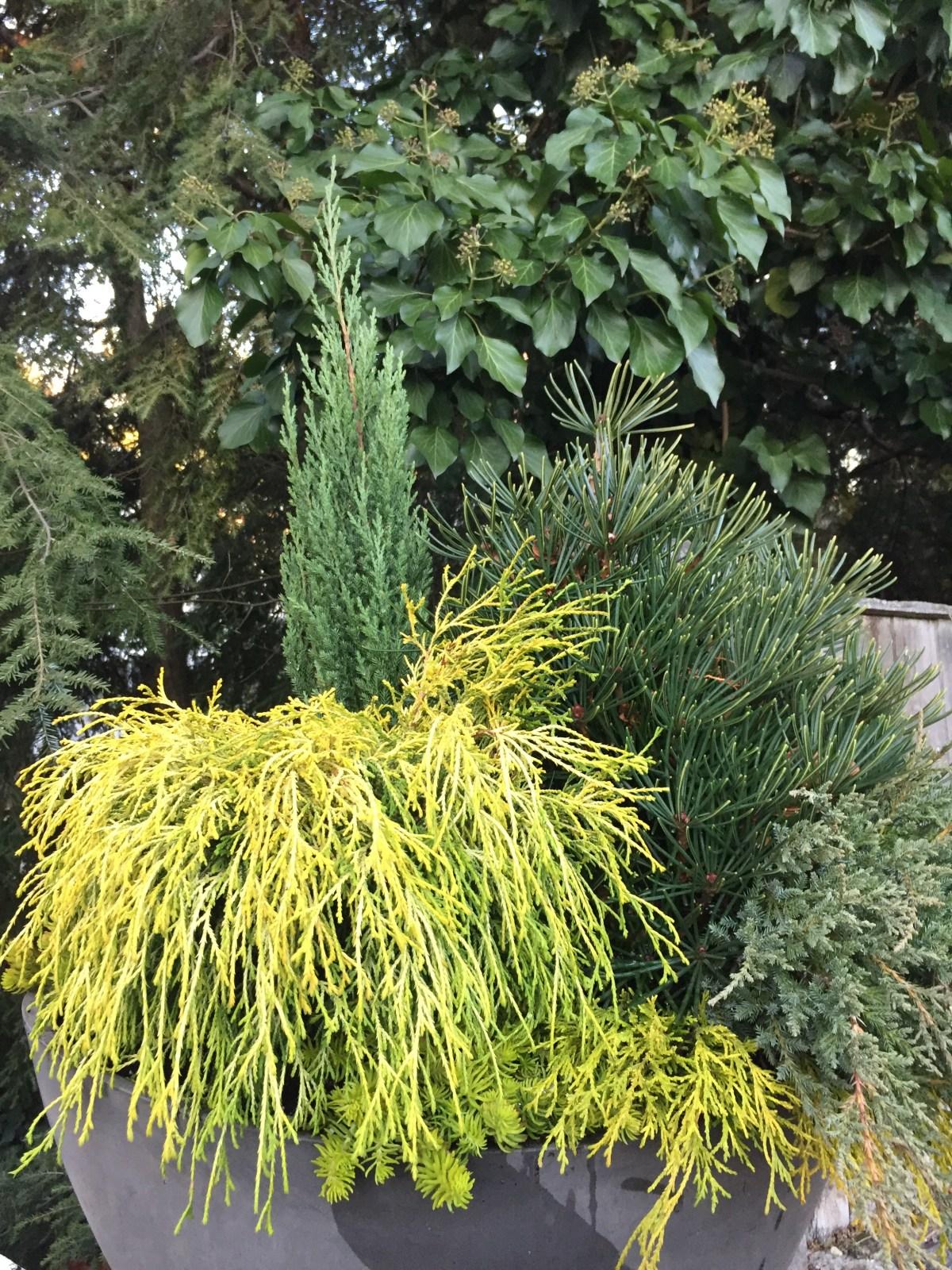 evergreen-mix-stonewall-winter-2016-marypf-2