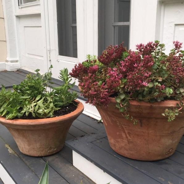 succulent-containers-sedum-1