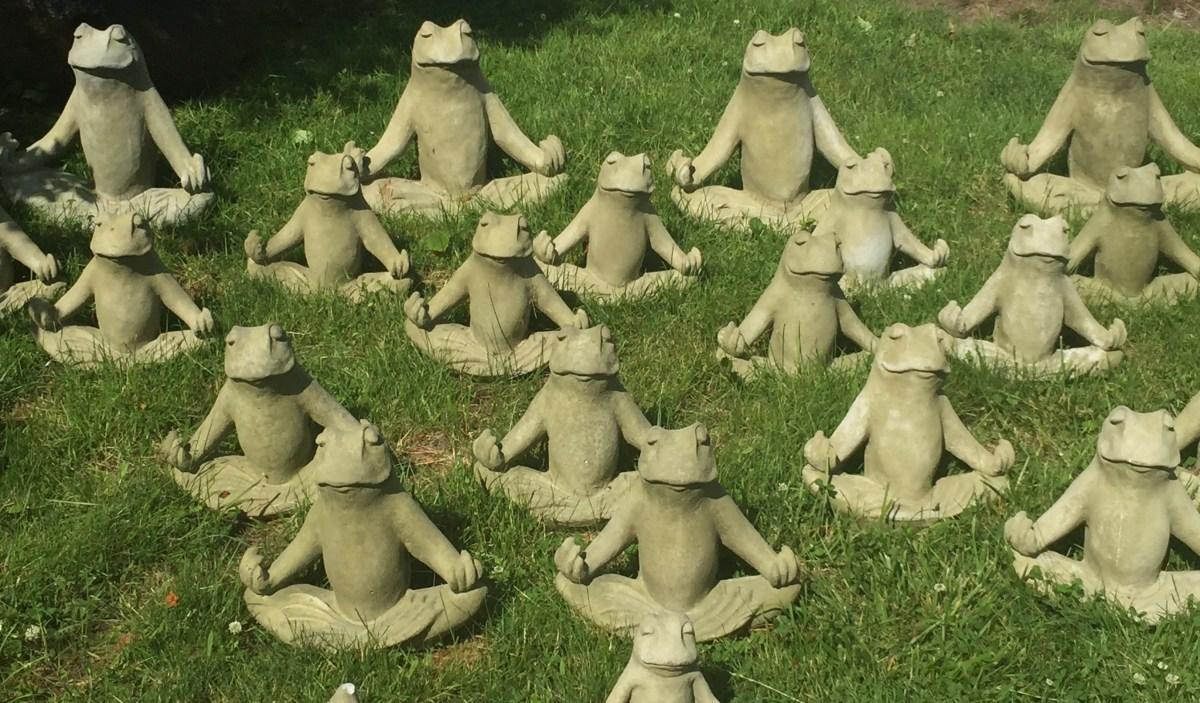 meditating frogs