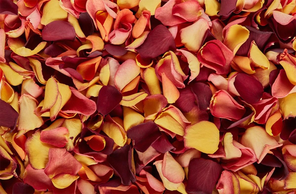 Autumn-mix-freeze-dried-rose-petals.jpg