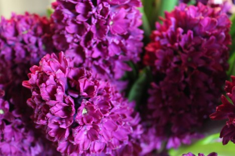 brilliant hyacinth@artefacthome