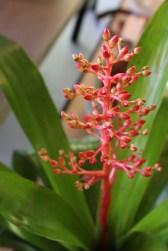 hot coral bromeliad@artefacthome