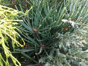 mixed winter greens@artefacthome