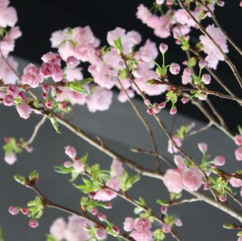 pink spring blossoms + branches@artefacthome