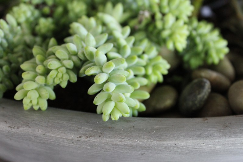 succulent detail-modern planter-pennoyer newman@artefacthome