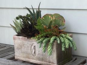 succulents-dimitri rectangle-campo de fiori@artefacthome