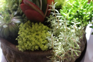 succulents-trojan planter-campo de fiori@artefacthome