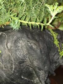 safari planter-succulents 1-pennoyernewman@artefacthome